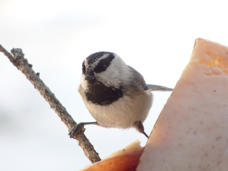 Pomóżmy ptakom izwierzętom przetrwać zimę