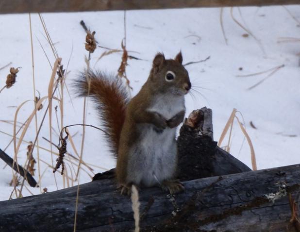 Gdzie wiewiórki zakopały swe zapasy nazimę?
