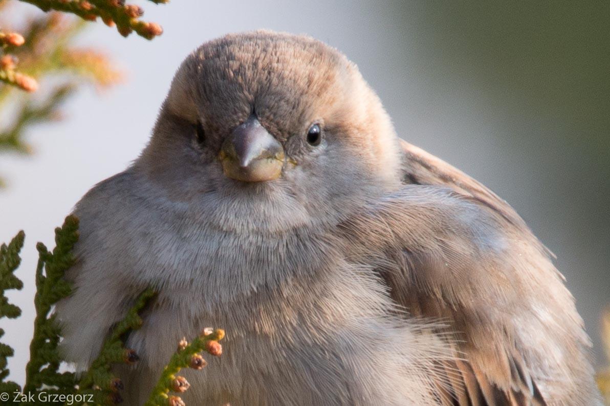 Ptaki ogrodowe